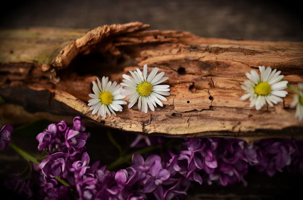 wood-1406895_1280